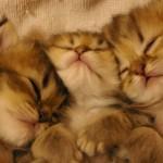 寒い冬に癒やしを。猫たちのぬくぬく画像を集めてみました