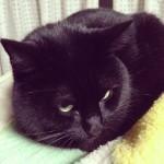 嗚呼、これぞ至福のひととき。Pinterestで黒猫写真を集めてました