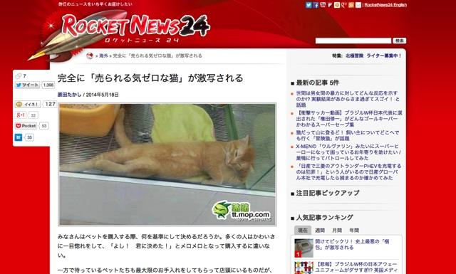 完全に「売られる気ゼロな猫」が激写される   ロケットニュース24