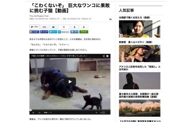 「こわくないぞ」 巨大なワンコに果敢に挑む子猫【動画】