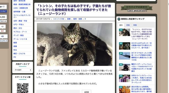 「トントン、その子たちは私の子です」子猫たちが捨てられていた動物病院を探し当て母猫がやってきた(ニュージーランド)   カラパイア
